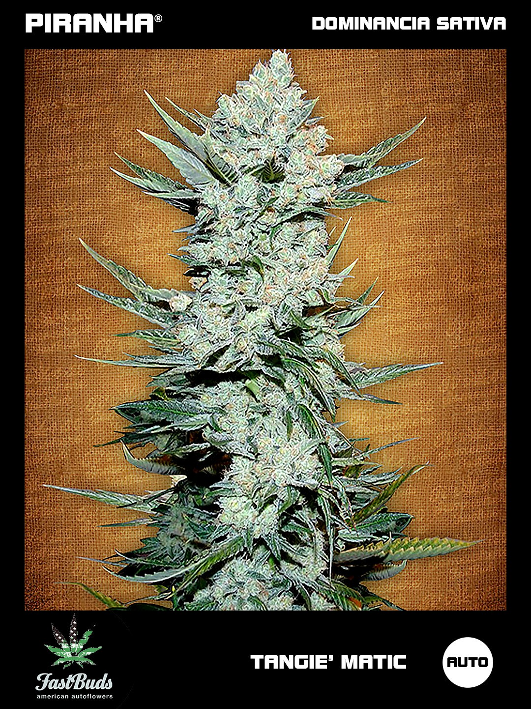 Tangie' Matic