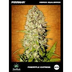 Pineapple Express (1u/3u)