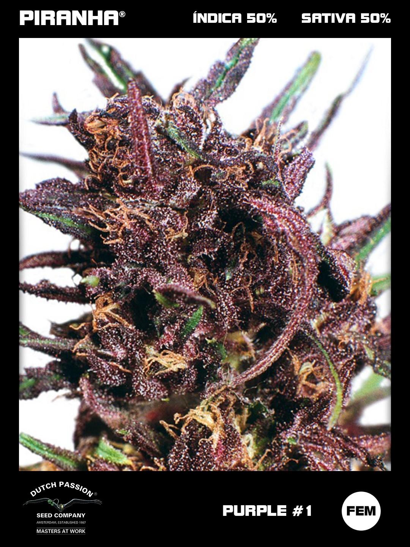 Purple N1