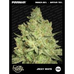 Jacky White (3u)