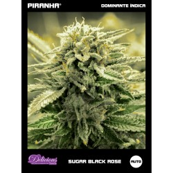 Sugar Black Rose Auto (3u)