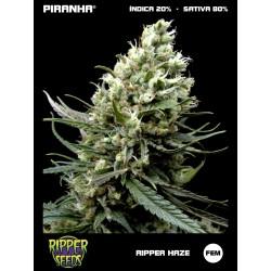 Ripper Haze (3u)