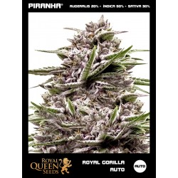 Royal Gorilla Auto (1u/3u)