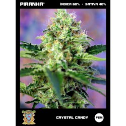 Crystal Candy (3+1u)