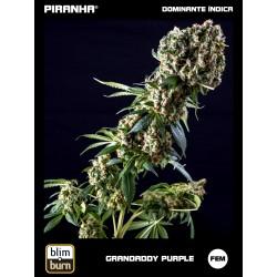Grandaddy Purple (3u)