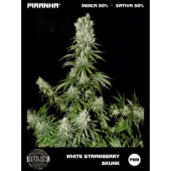 White Strawberry Skunk (3u)
