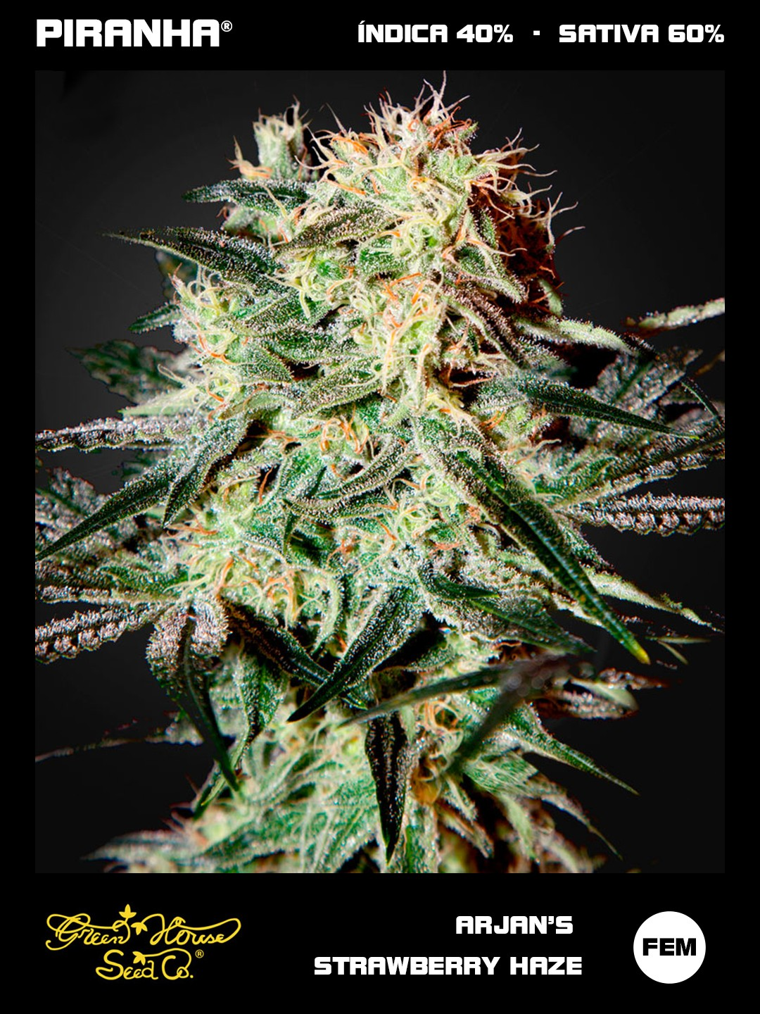 Arjan´s Strawberry Haze