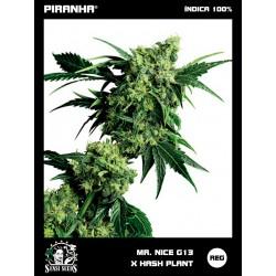 Mr. Nice G13 x Hash Plant (10u)