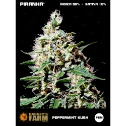 Peppermint Kush (3u)