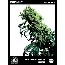 Northern Lights No5 x Haze (10u)