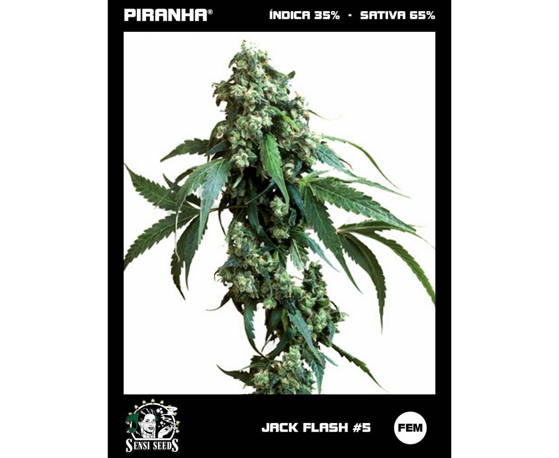 Jack Flash No5 (3u)