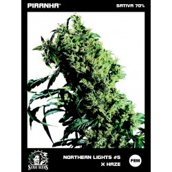 Northern Lights No5 x Haze