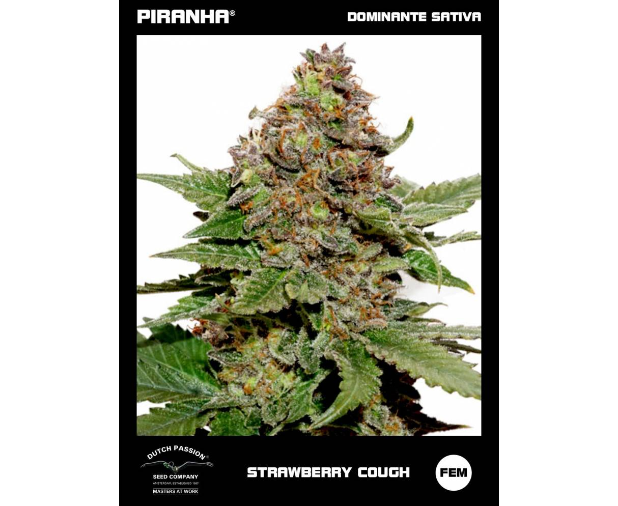 Strawberry Cough (3u)