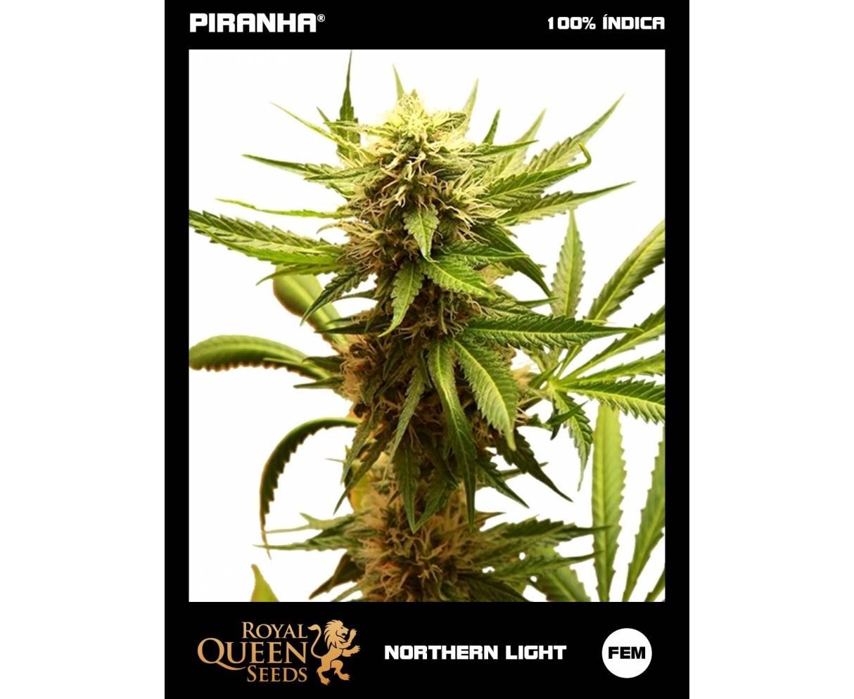 Northern Light (1u/3u)
