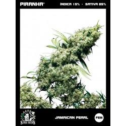 Jamaican Pearl (3u)